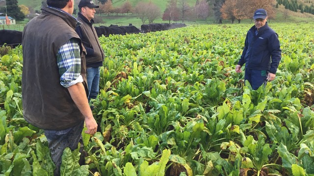 Fodder Beet Case Study article image