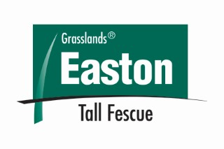 Easton tall fescue