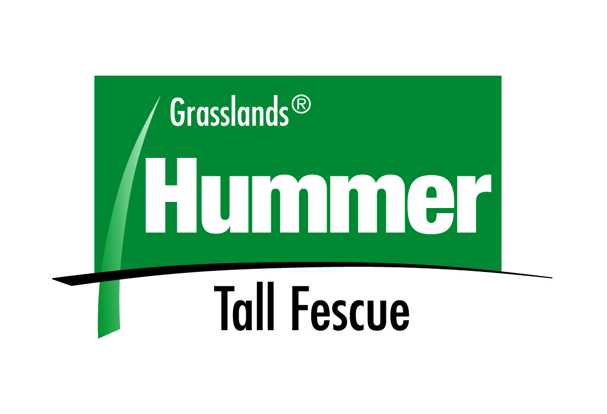 Hummer tall fescue